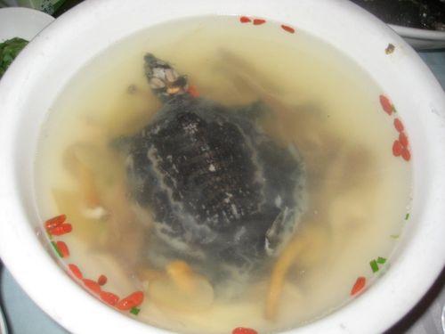 Sopa de tortuga